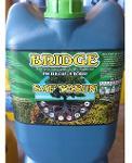 BRİDGE-Pure Algae