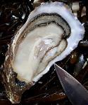 Huîtres creuses de Bretagne - Facile à ouvrir
