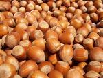 Hazelnut (nut)
