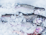 Salmon milk / vladivostok