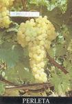 Table Grape Varieties