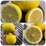Spanish fresh lemons, oranges and other fruits - wholesale