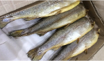 Cold Smoked Trout headless carcass 1 kg + gutted (c) without packaging per 1 kg