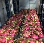 Fruit du dragon / pitaya