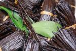 Vanilla Extracts