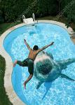 Baskılı Havuz Fayansları