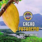 Cacao Patanemo