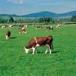 Forage or Pasture Seeds