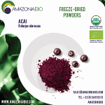 Organic Açaí Freeze-Dried Powder with 20% of Tapioca