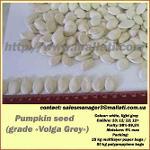 Pumpkin seed   (grade «Volga Grey»)