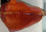 Cold smoked trout balyk 1 kg + gutted wu for 1 kg