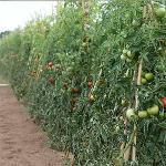 Line of fertilisers and pesticides