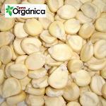 Giant Inca Corn