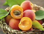 ORCHARD FRUIT notes
