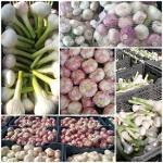 Garlic ( Fresh )