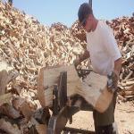 Buche und Eiche Brennholz 25cm und 33cm