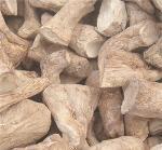 shiitake mushroom stipe