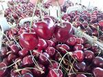 Iran's Cherry