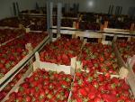 Свежие  фрукты из Сербии
