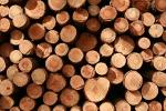 Softwood timber