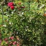 VEGETABLE AND CLIMBING PLANT SUPPORT NETTING