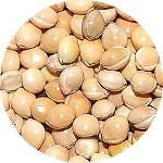 White millet