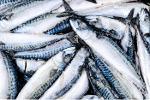 mackerel frozen
