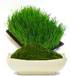 Organic EU Barley Grass Powder