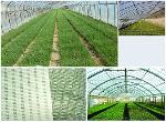 Fully biodegradable PVOH environmental protection sunshade film