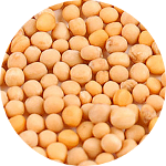 White mustard seeds