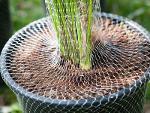 Сетка для растений