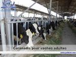 Coranadis pour vaches