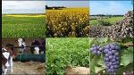CHAMBRE D'AGRICULTURE, DES PÊCHES, DE L'ÉLEVAGE ET DES FORÊT