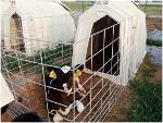 calf hutches