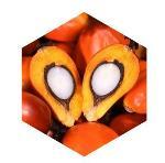 L'huile de palmiste