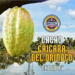 Cacao Caicara del Orinoco