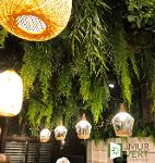 Plafond végétal décoration végétalisée sans entretien