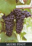 Red Grape Varieties