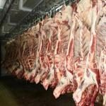 Pork Meat / Pork Carcass 6 Way Cut / Pork Feet