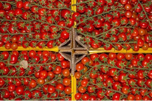 Pomodorino Ciliegino