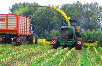 Harvest Protection