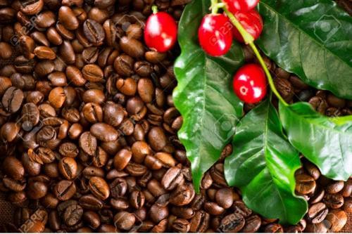 Café tostado en granos