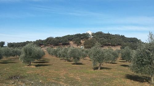 Finca de olivos Málaga