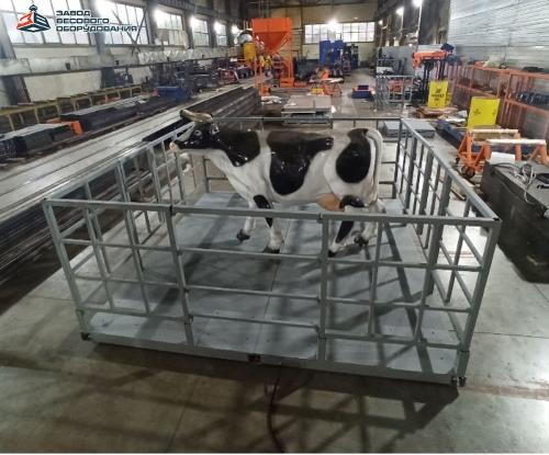 Scales for animals. Floor scales for cattle VP-S 2000 kg