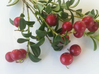 Juice concentrate arctic lingonberry (vaccinium vitis-idaea)