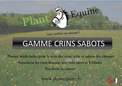 Phytothérapie pour le soin des crins et sabots des chevaux