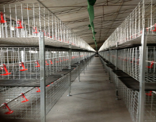 Chicken battery cages