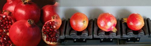 calibrage fruits et légumes