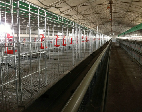 Broiler layer cage