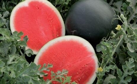 Melon, Watermelon,Yellow Melon